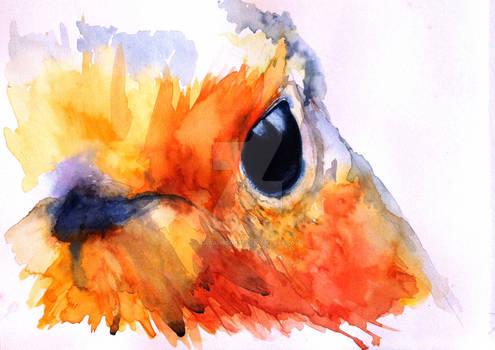 Robin's eye