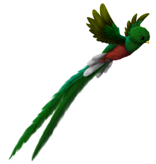 Flying Quetzal by Brookreed
