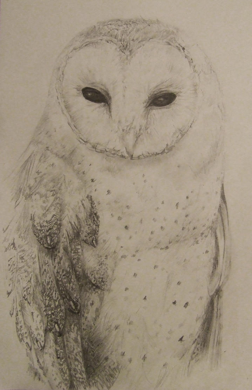 Barn owl sketch by HenchGoose on DeviantArt