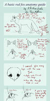 A basic RED FOX anatomy guide