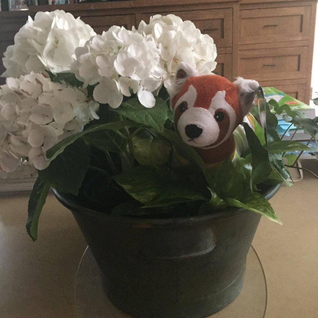 A Mischievous Little Ferret In My Flowers by FireNationPhoenix