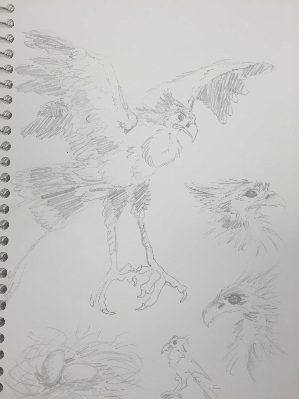 Imperial Phoenix Concept Sketches by FireNationPhoenix