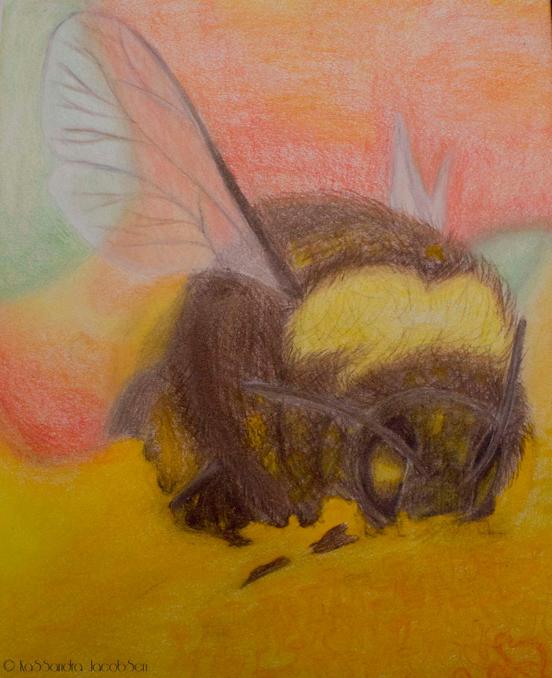 Bumble Bee Macro by j0wey