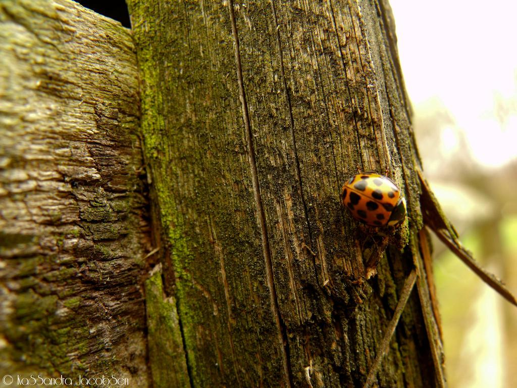 Lone Ladybug by j0wey
