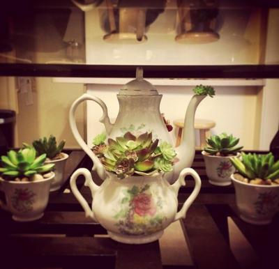 Succulent Tea Party by j0wey