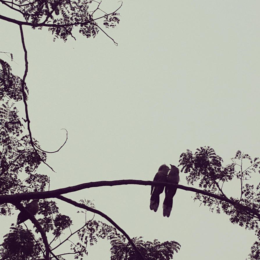 pajarillos en san bernardino by abha