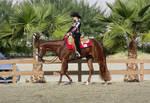 show horse profile