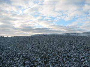 winter scenes - 5