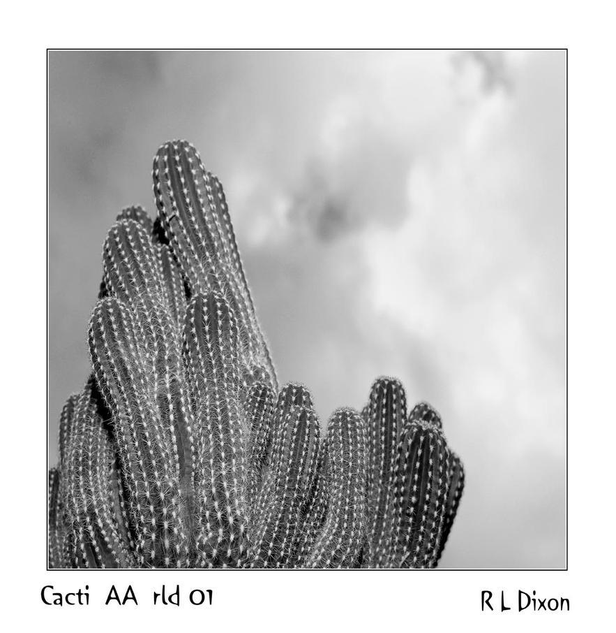Cacti AA rld 01 dasm by richardldixon