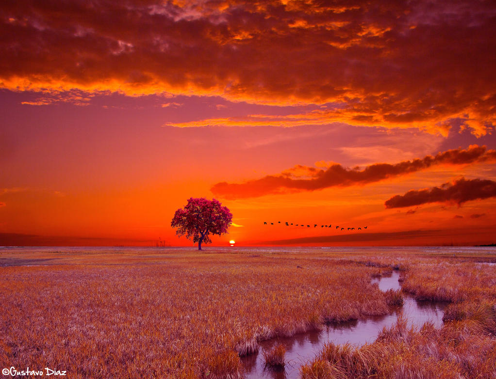 Sundown at the Delta Marsh by Lucaskexby