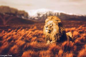 A Lion by gustiidiaz