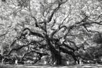 Trees exhale