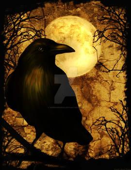My Raven