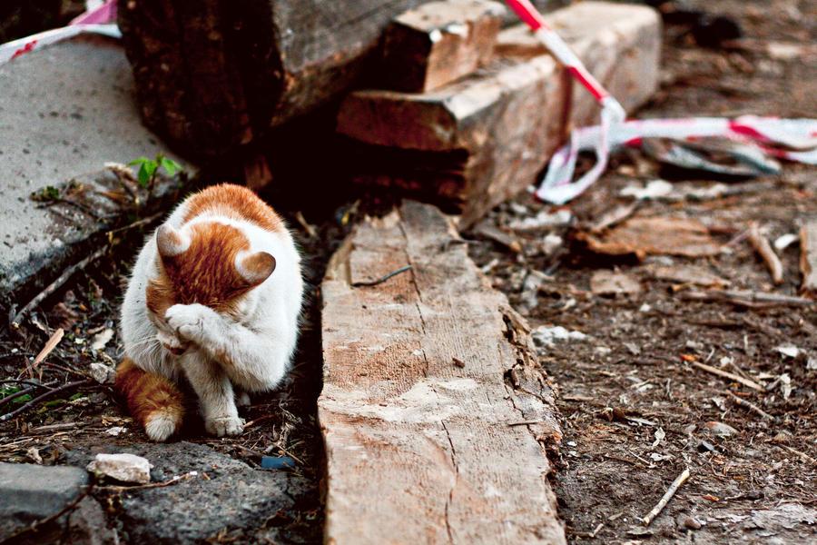 http://img00.deviantart.net/5d01/i/2012/143/1/c/crying_cat_by_myblackprince-d50vwox.jpg