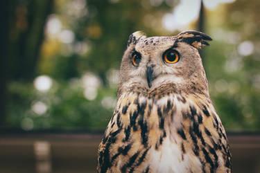 eagle-ow