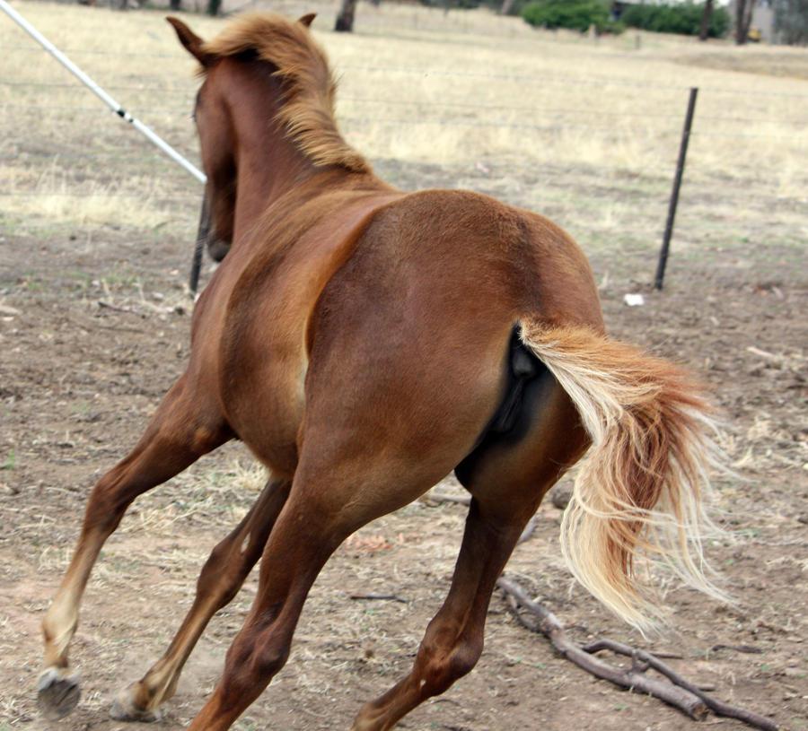 Foal 006 by aussiegal7