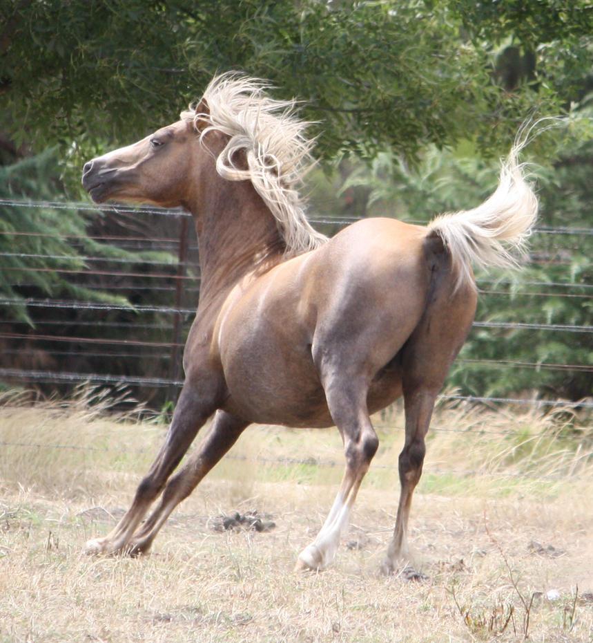 Ponies 005 by aussiegal7