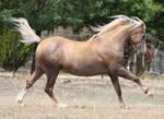 Ponies 015