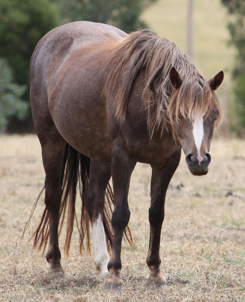 .·:: Vladimir ::·. Ponies_022_by_aussiegal7