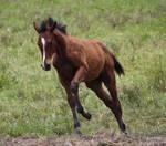 Foal 010