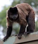 Monkey 03