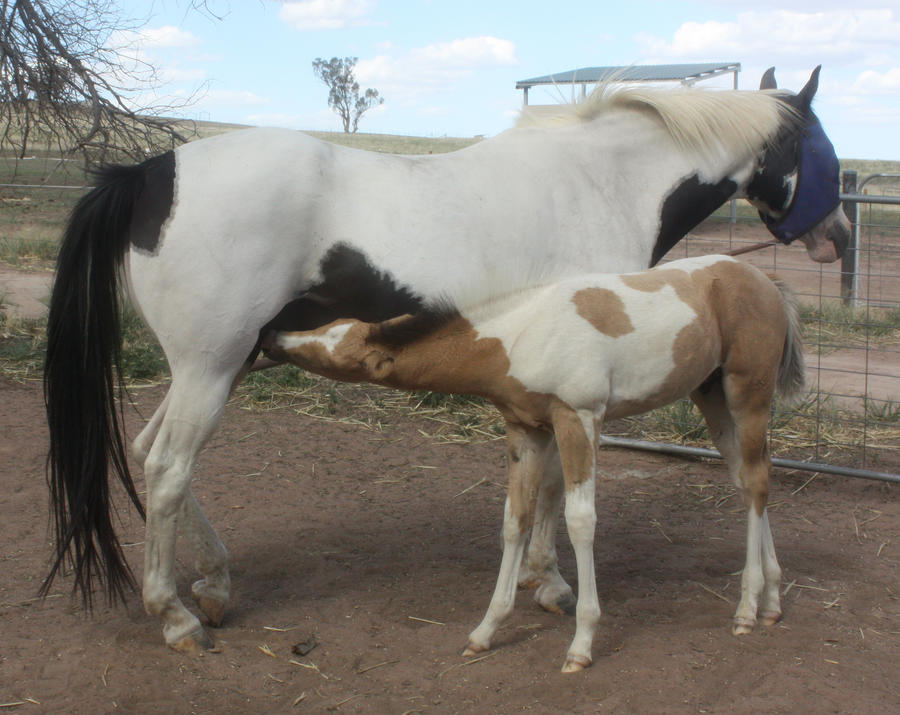 Capitain Spark a besoin d'un relooking. Foal_018_by_aussiegal7