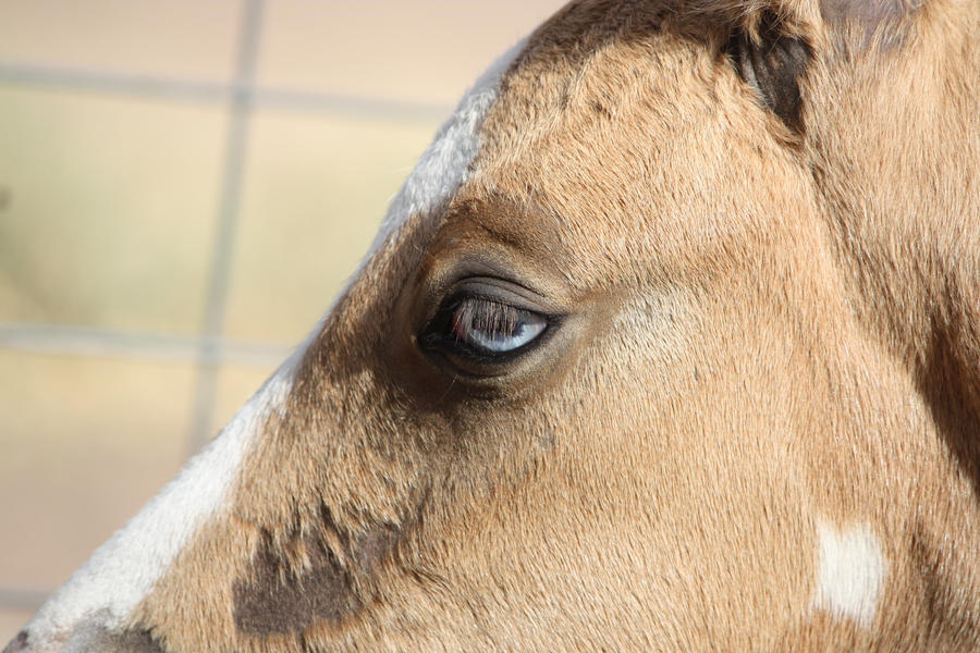 Capitain Spark a besoin d'un relooking. Foal_021_by_aussiegal7