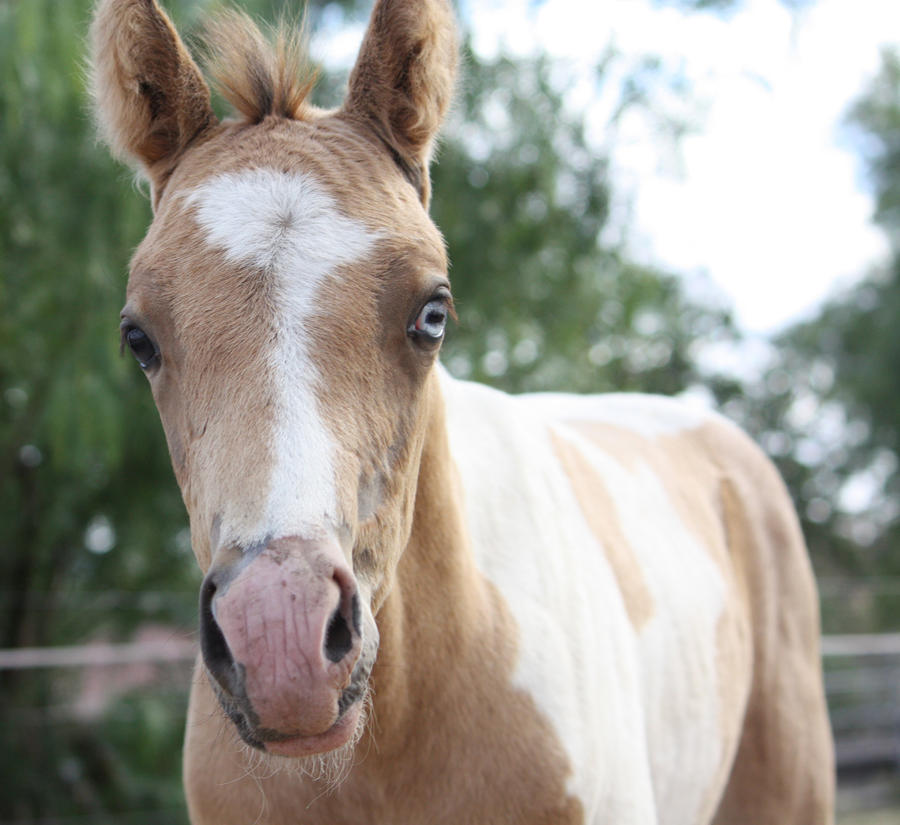 Capitain Spark a besoin d'un relooking. Foal_030_by_aussiegal7