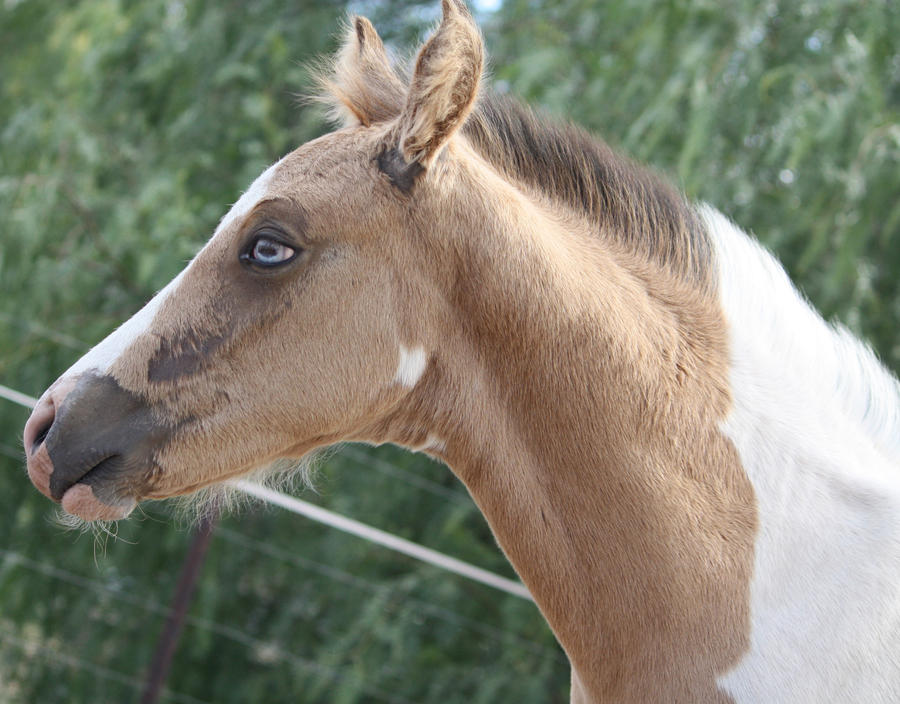 Capitain Spark a besoin d'un relooking. Foal_032_by_aussiegal7