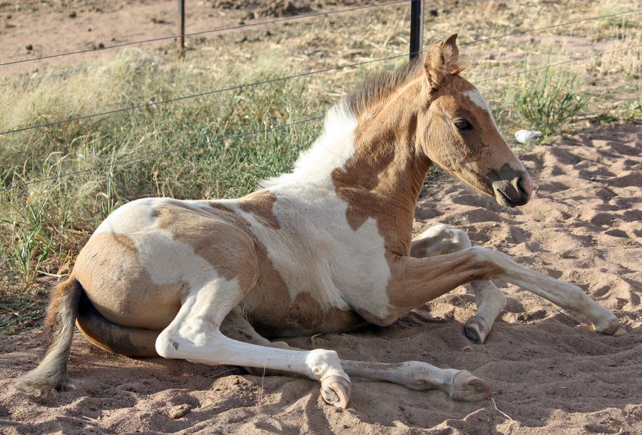 Capitain Spark a besoin d'un relooking. Foal_037_by_aussiegal7
