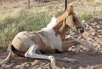 Foal 037