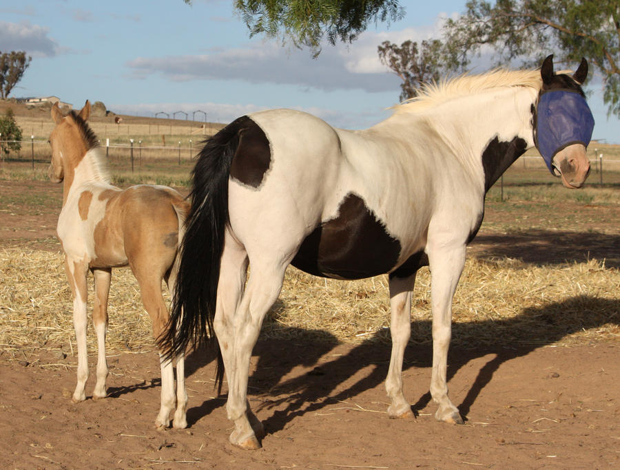 Capitain Spark a besoin d'un relooking. Foal_038_by_aussiegal7