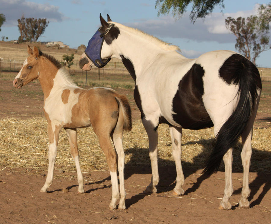 Capitain Spark a besoin d'un relooking. Foal_039_by_aussiegal7