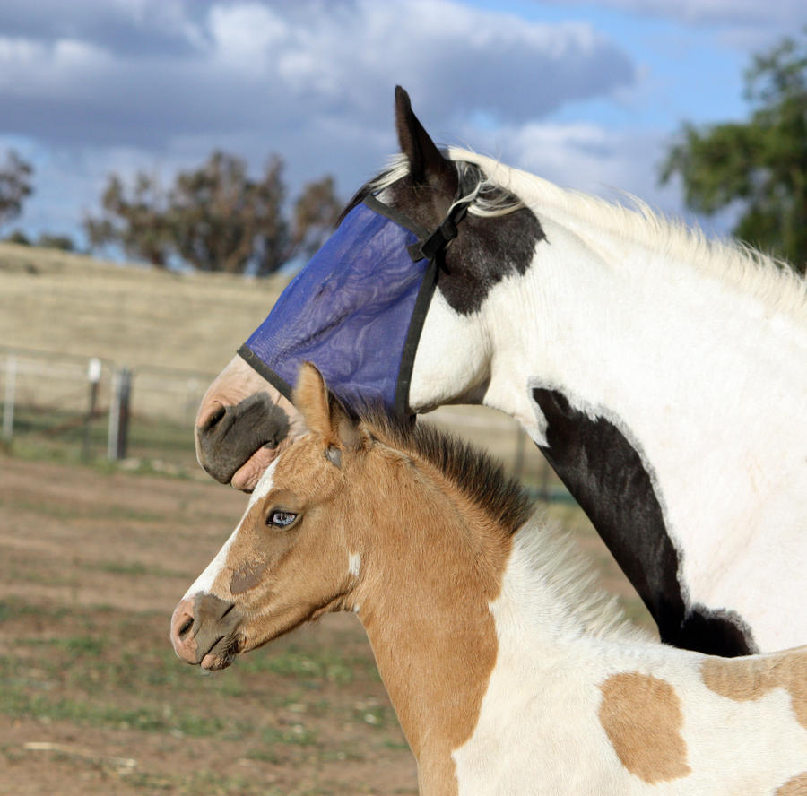 Capitain Spark a besoin d'un relooking. Foal_041_by_aussiegal7