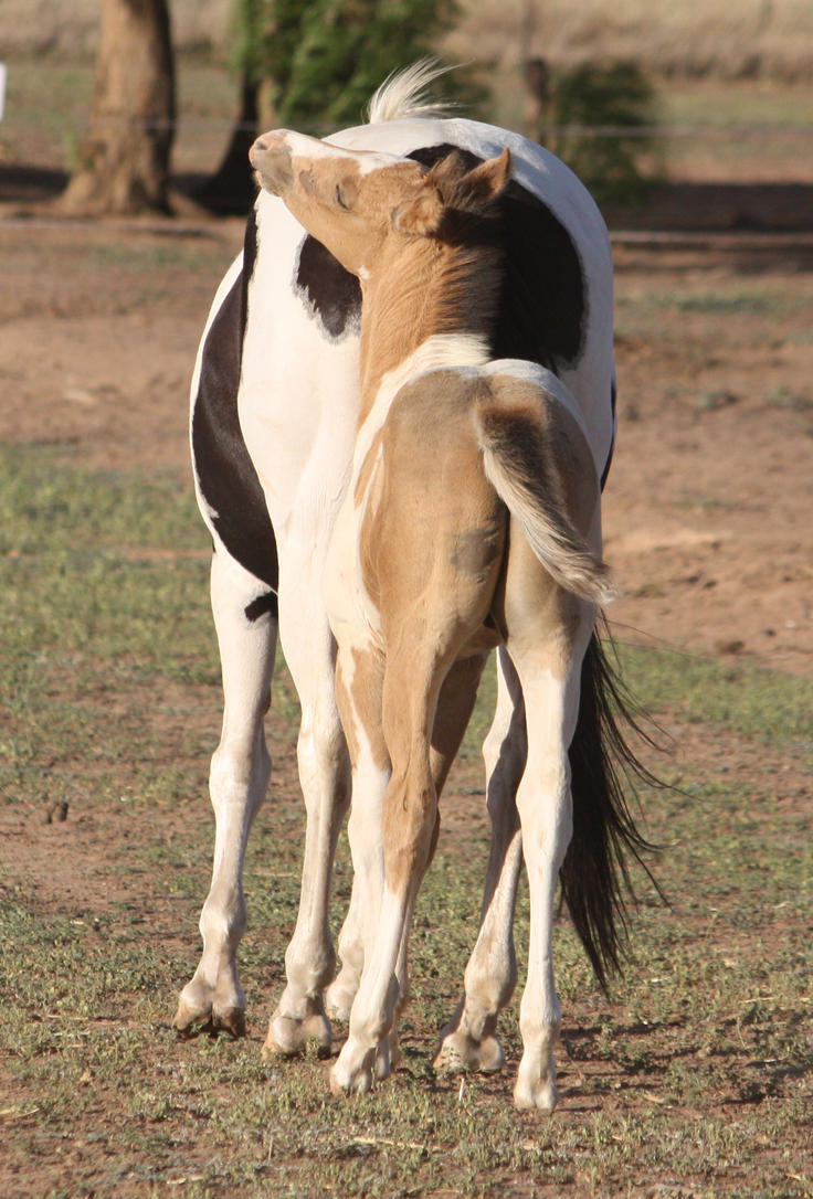 Capitain Spark a besoin d'un relooking. Foal_043_by_aussiegal7