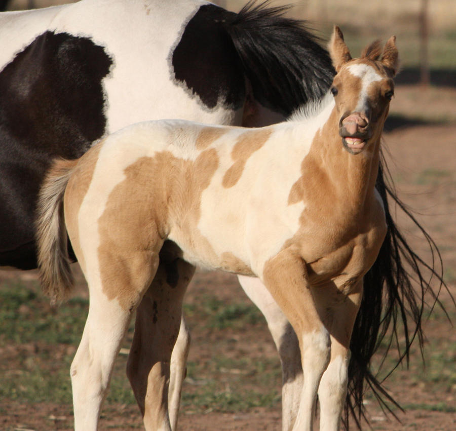 Capitain Spark a besoin d'un relooking. Foal_045_by_aussiegal7