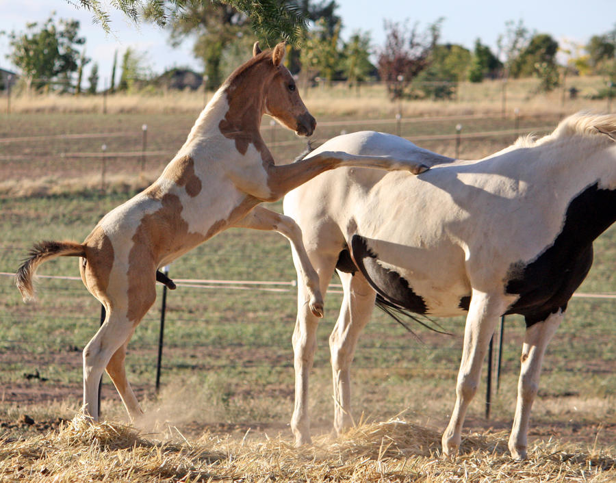 Capitain Spark a besoin d'un relooking. Foal_046_by_aussiegal7