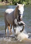 Horseys River 191