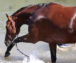 Horseys River 200