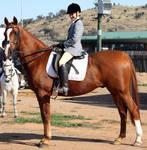 Pony Dressage - Stock - 10