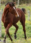 Costa - Horse Stock - 14