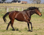 Elle - Horse Stock - 146