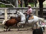 Stock - Horse Team Penning - 036