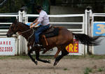 Stock - Horse Team Penning - 024