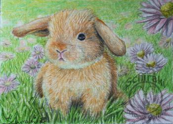 little bunny ACEO by Schiraki