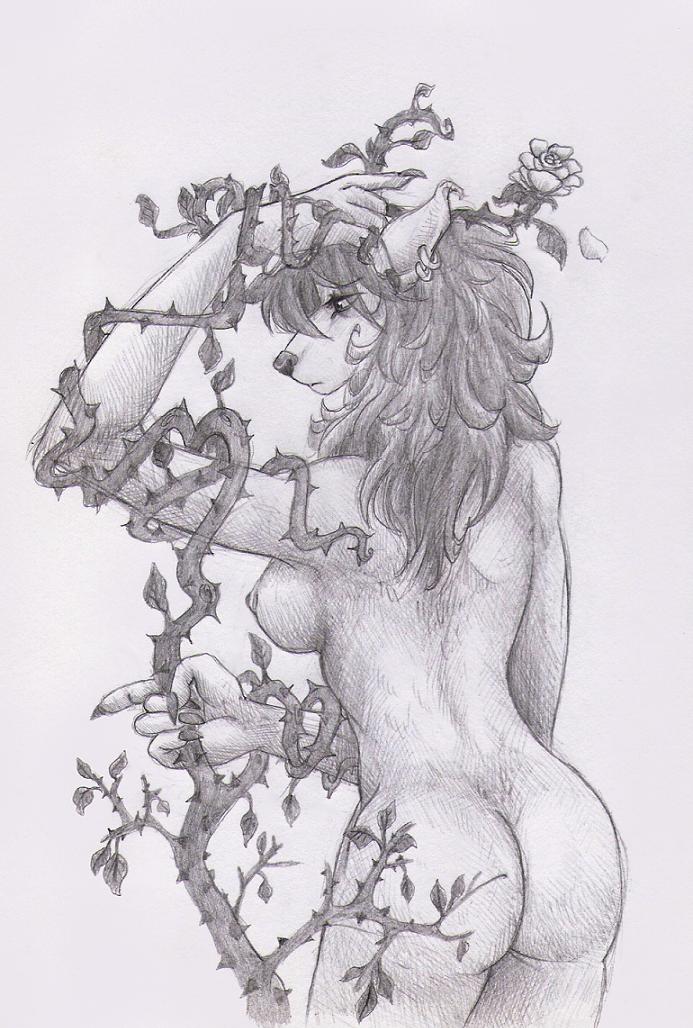 rose bush by maheylah on deviantart