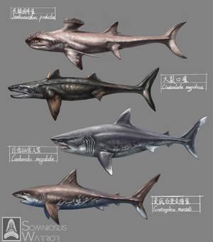 Prehistoric Sharks