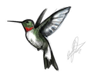 Hummingbird Tattoo by YLimes