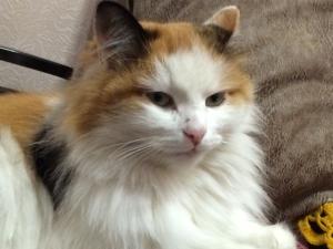 balooncat's Profile Picture