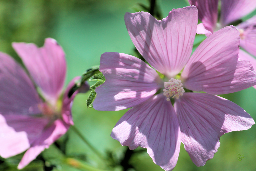 Purple Flowers for Spirit Day by JJPoatree